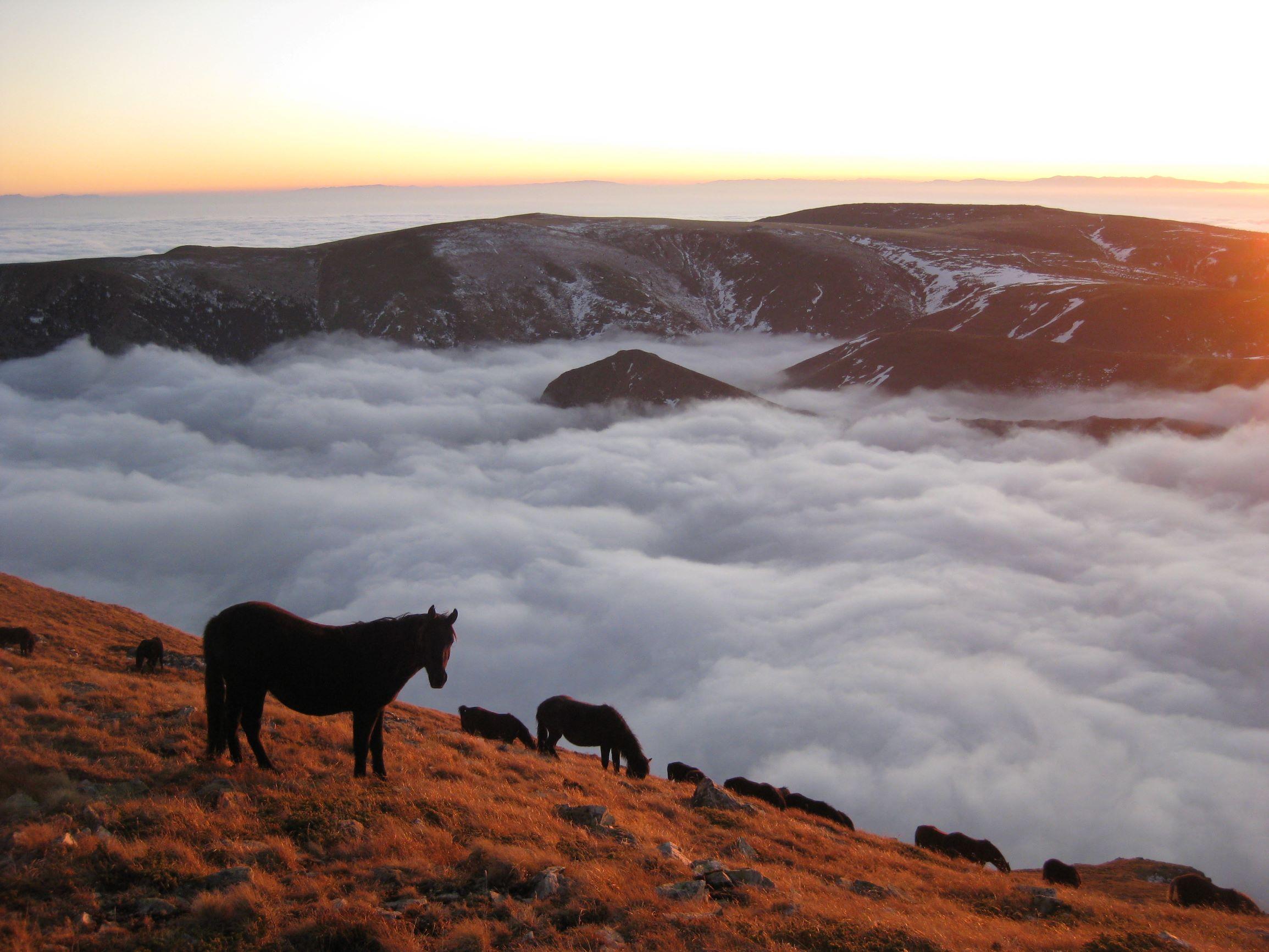 High pasture in Rila